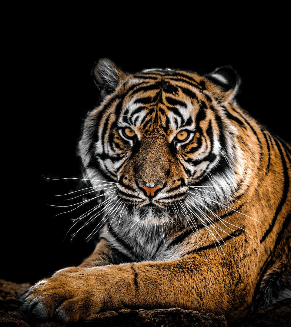 Wild-animal-pic-26.png